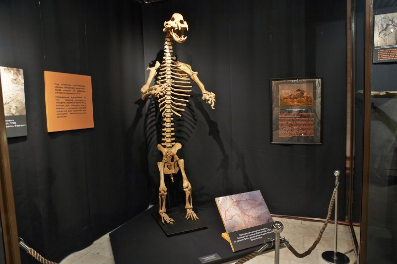 Пещерного медведя выставят в Дарвиновском музее с 13 ноября по 3 февраля
