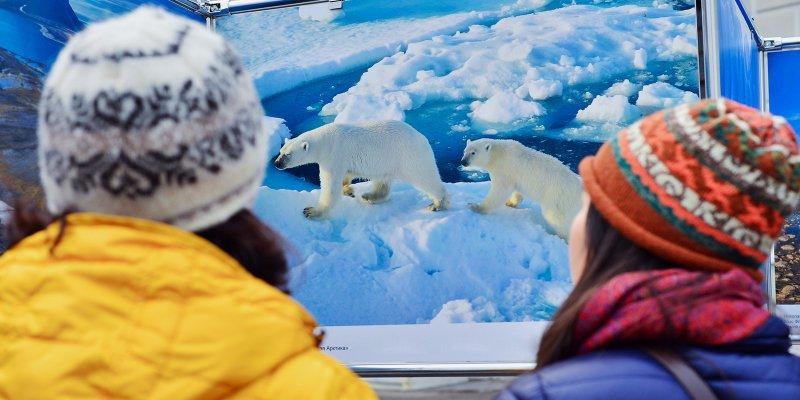 Московских школьников пригласили в Арктику на экспедицию